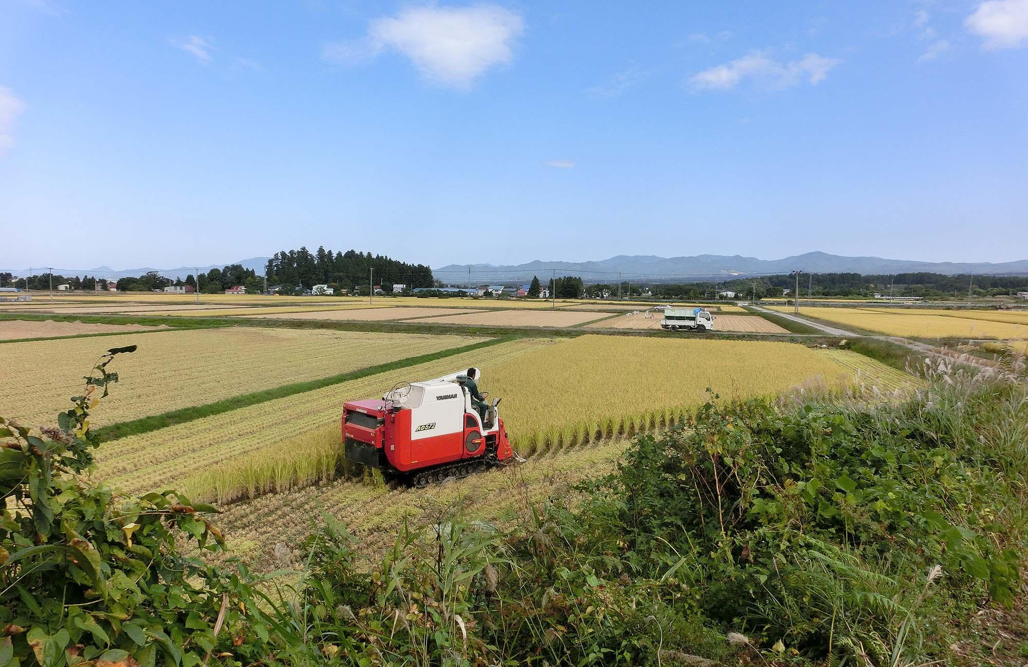 写真6 整然と区画整理された現在の田園風景。2014(平成26)年9月撮影。